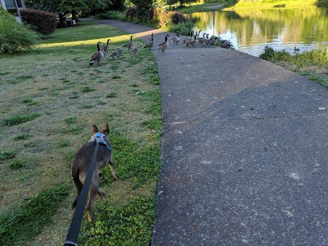 A walk in Eugene, Oregon