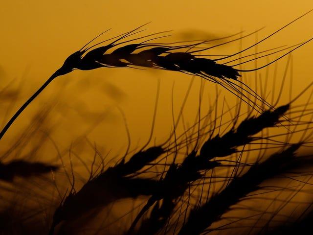 Μπορούμε να ευχαριστήσουμε τη γεωργία και τα μαλακά τρόφιμα για το «F» λέξη, ισχυρίζεται προκλητική νέα μελέτη