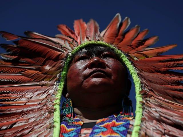 """Die Waldbrände im Amazonas sind eine Form von """"Völkermord"""""""