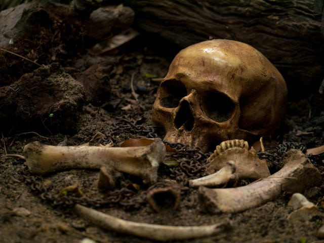 What a Newly Discovered Gravesite Can Tell Us About Black Life Post-Slavery