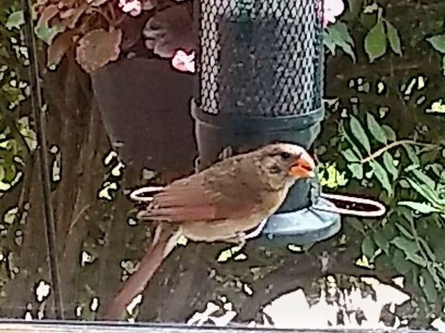 Help me identify this bird