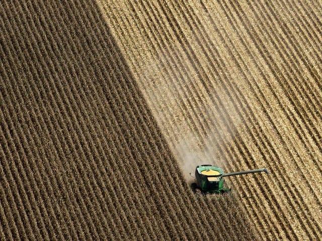 研究发现,玉米污染每年导致数千名美国人死亡