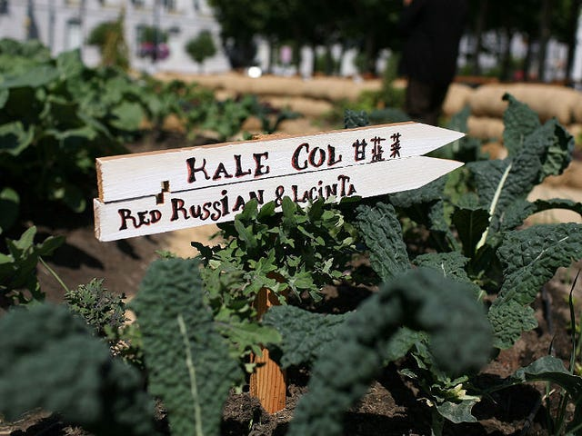 There's a Kale Shortage! Or Not.