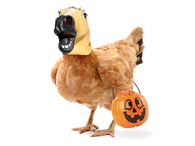Dandani Ayam Anda dengan Kulit dan Renda Halloween ini