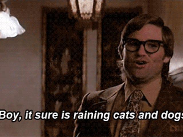 Pojke, det är säkert att regna katter och hundar