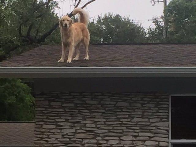 Bon chien frissons sur le toit