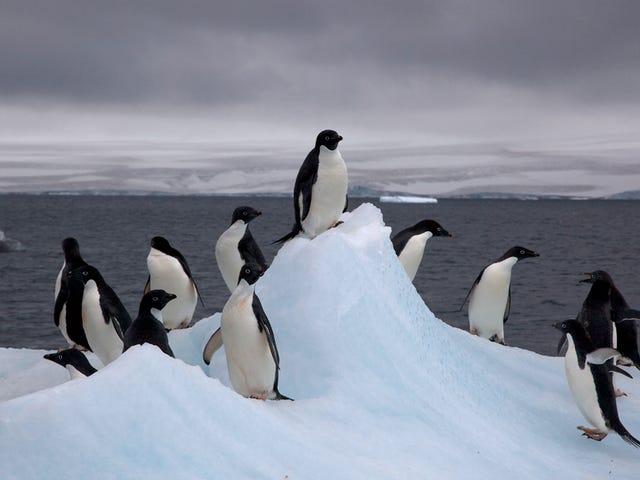 Den sista platsen på jorden för att känna global uppvärmning