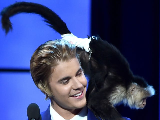 """<a href=""""https://trackrecord.net/justin-biebers-old-monkey-was-suffering-from-stockholm-1822024554"""" data-id="""""""" onClick=""""window.ga('send', 'event', 'Permalink page click', 'Permalink page click - post header', 'standard');"""">Justin Bieber's Old Monkey Was Suffering From Stockholm Syndrome, Or Something</a>"""