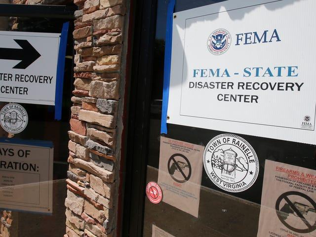 Женщина из Западной Вирджинии, которая назвала Мишель Обаму «Обезьяной на каблуках», отправлена в тюрьму за хищение 18 000 долларов в помощь FEMA