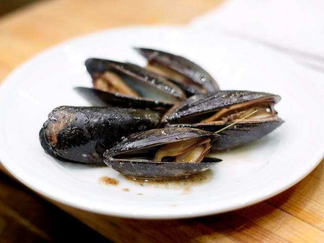 Mussels Living Off the Coast of Seattle Test Positive for Opioids