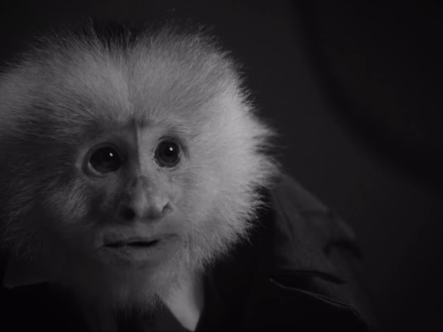 Netflix just dropped a David Lynch short starring a talking monkey named Jack