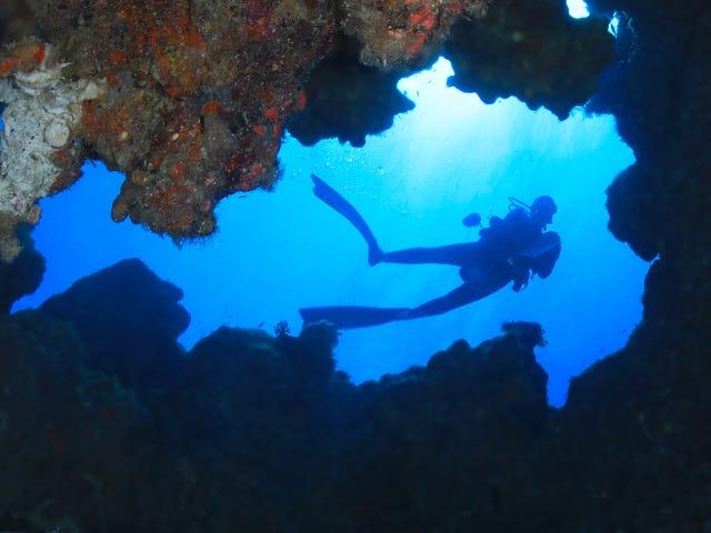 Otra cosa que mata a los arrecifes de coral: nuestra caca