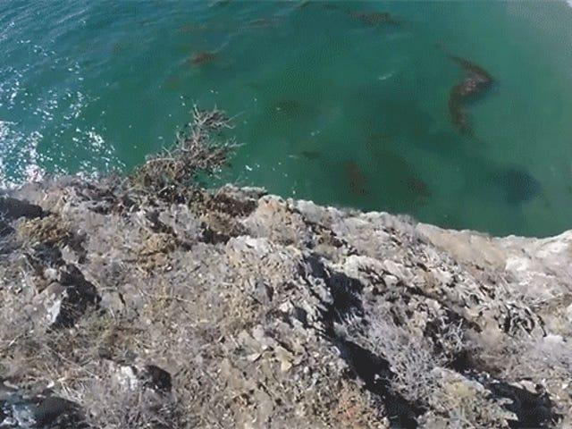 Cliff Jumper évite de justesse une mort rocheuse
