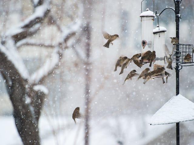 Todavía hay tiempo para unirse al conteo de pájaros de Navidad