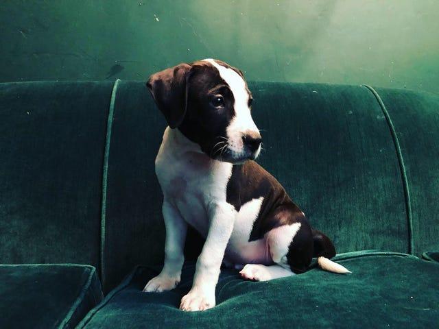 Yeni Köpek Bayramı Günü!
