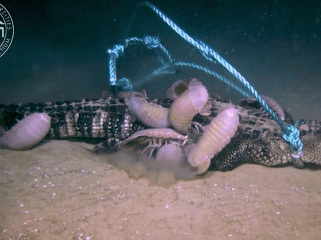 Αναστατωμένοι Βίντεο Δείχνει Τι συμβαίνει με έναν νεκρό αλιγάτορα στο βυθό της θάλασσας