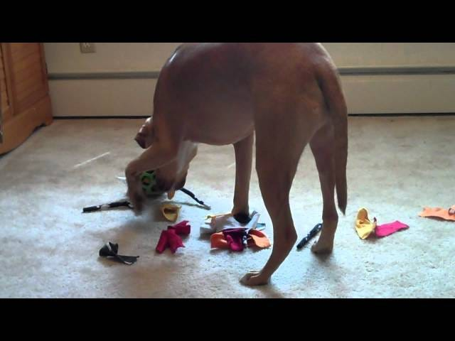 This DIY Dog Toy Keeps Your Pet from Chewing Up Your Plushies