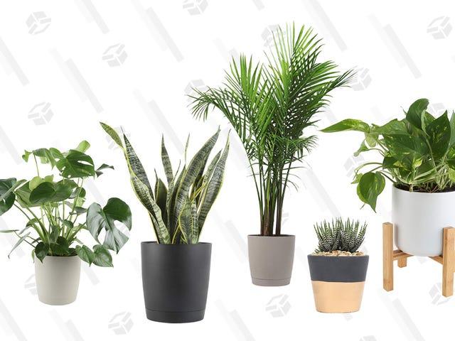 इस एक दिवसीय अमेज़न सेल के साथ आपके घर में कुछ और पौधों का स्वागत है