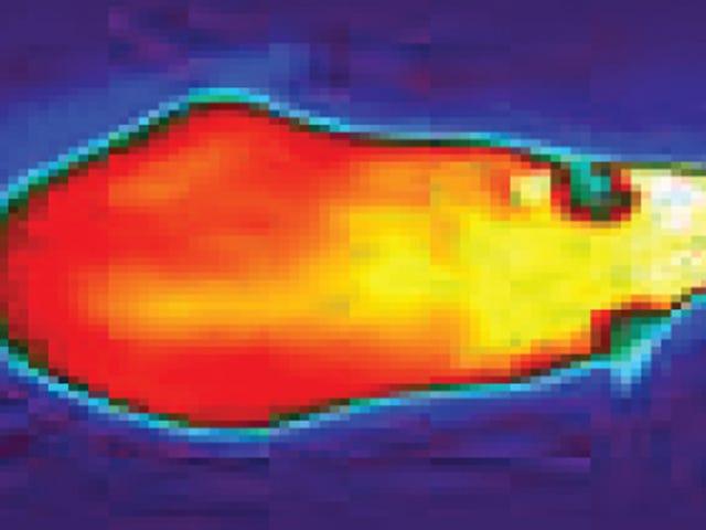 ¿Adelgazar bajo cero?: identifican la proteína que hace que el organismo queme grasas en respuesta al frío