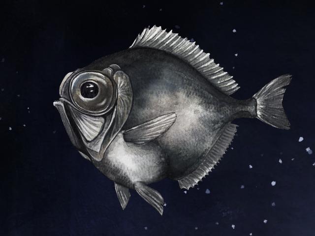Nogle Deep Sea Fish kan se farve i næsten total mørke