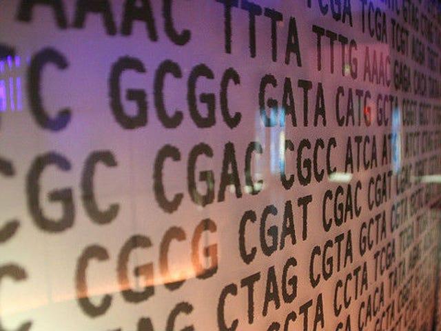 Arrêtez de vous fier à la génétique et construisez du muscle avec la science