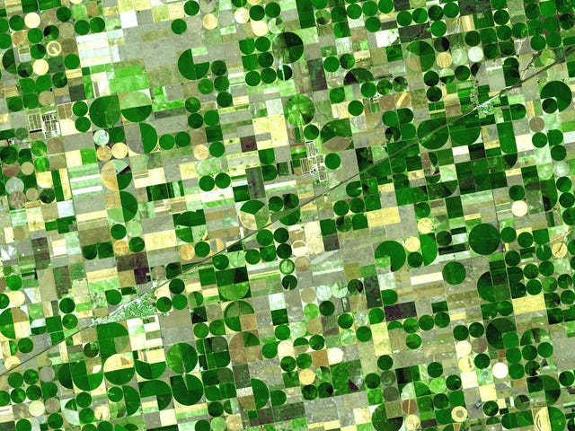 Scathing Report Accuses the Pentagon of Developing an Agricultural Bioweapon
