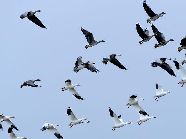 特朗普攻击法律保护数百万只鸟免遭意外屠杀