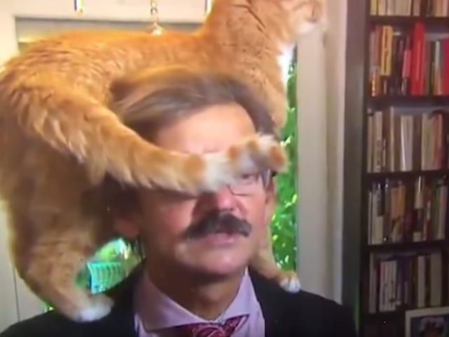 "<a href=""https://news.avclub.com/good-cat-crawls-around-polish-historians-head-during-ve-1827445051"" data-id="""" onClick=""window.ga('send', 'event', 'Permalink page click', 'Permalink page click - post header', 'standard');"">Good cat crawls around Polish historian&#39;s head during very serious TV interview<em></em></a>"