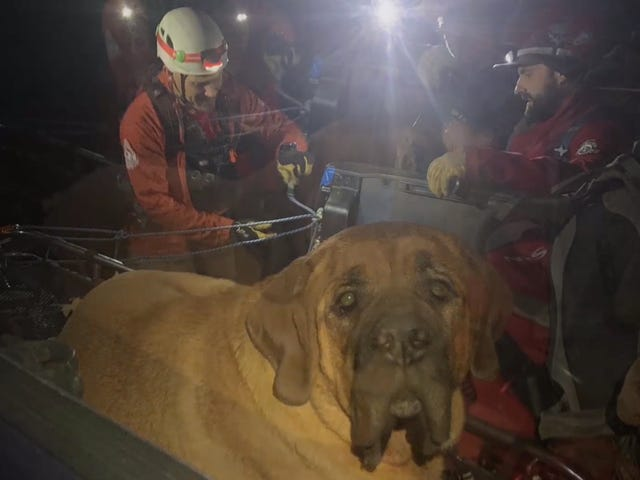 Enormous Dog Rescued After Hiking Too Much