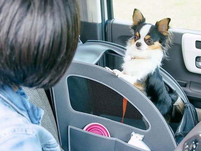Preciso que a Honda Japan comece a vender seus acessórios para cães nos EUA