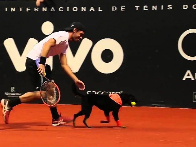 Bahkan Jangan Mencoba Memberitahu Saya Menggunakan Bola Anjing Pada Pertandingan Tenis Adalah Gagasan Buruk