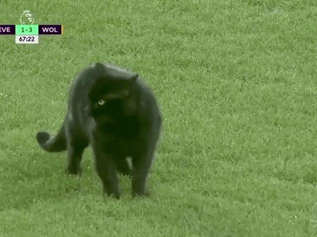 Kara Kedi, Evde Acı Çekenlerin Zevkine Kadar Everton Oyununu Keser