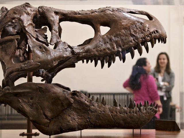 Dinozaury ssać teraz