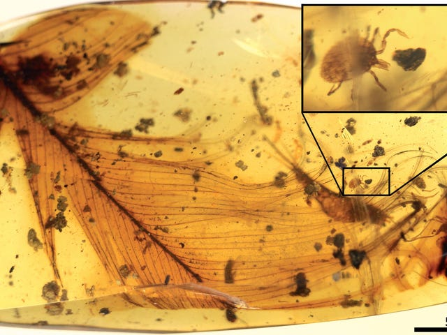 New Evidence From Ancient Amber Shows Dinosaurs Were Plagued by Ticks