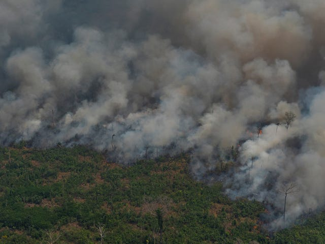 What Caused the Amazon Rainforest Fires?