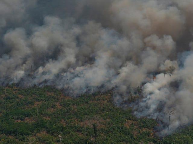 Điều gì gây ra vụ cháy rừng nhiệt đới Amazon?
