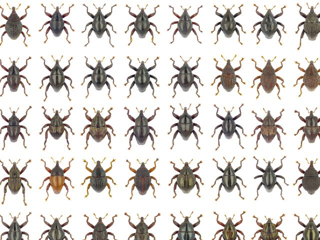 103 New Beetle Species Named After Star Wars Characters, Mythological Beasts, and More