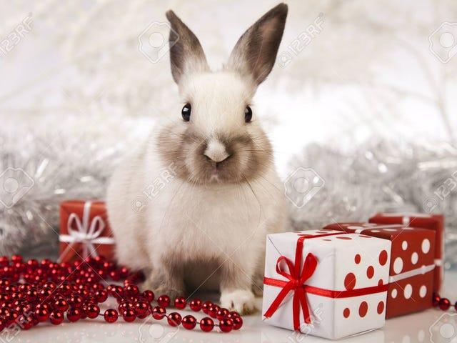 White rabbits!