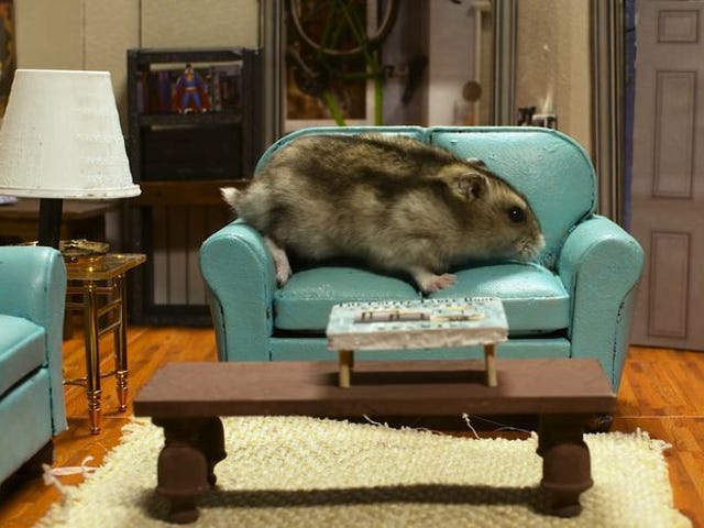 """<a href=""""https://news.avclub.com/seinfeld-reimagined-as-a-show-about-nothing-and-hamster-1798254106"""" data-id="""""""" onClick=""""window.ga('send', 'event', 'Permalink page click', 'Permalink page click - post header', 'standard');""""><i>Seinfeld</i> reimagined as a show about nothing—and hamsters</a>"""