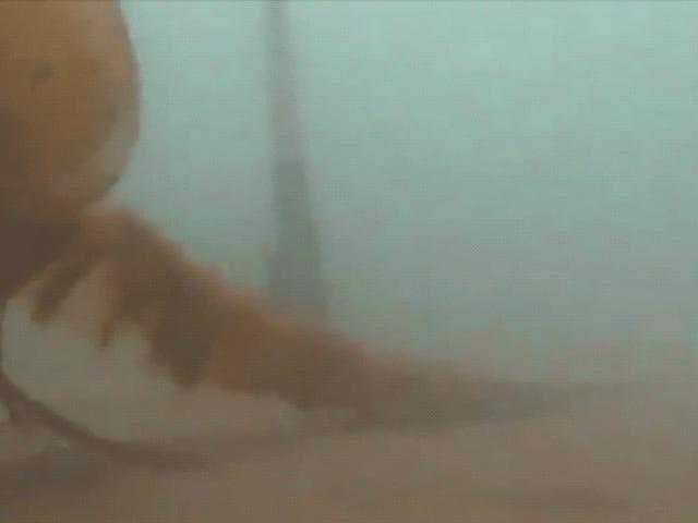 Wissenschaftler erfassen seltene Aufnahmen von Spooky-Ass Arctic Jellyfish