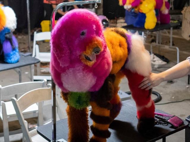 Saturday Night Social: มาทำสีผม Inspo จากสุนัขสุดเก๋เหล่านี้กันเถอะ