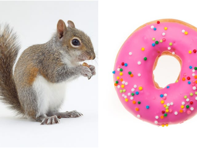 "<a href=""https://thetakeout.com/doughnut-nabbing-squirrel-also-ready-to-steal-pizza-rat-1827172296"" data-id="""" onClick=""window.ga('send', 'event', 'Permalink page click', 'Permalink page click - post header', 'standard');"">Doughnut-nabbing squirrel also ready to steal pizza rat'<em></em>s mantle<em></em></a>"