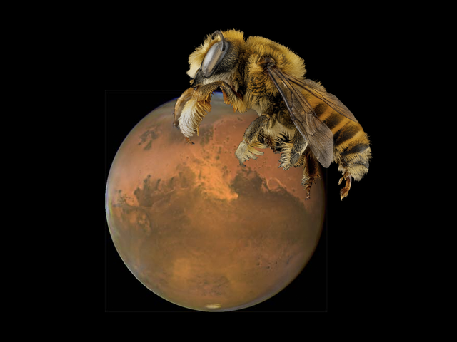 Buzz Buzz, NASA Funds Project to Put Bee Robots on Mars