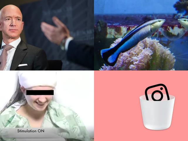 Jeff Bezos Nudes, Self-Aware Fish och Brain Zapping: Veckans bästa Gizmodo-berättelser