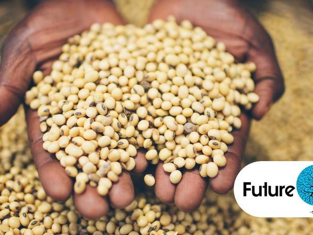 世界の食糧供給は危険にさらされています