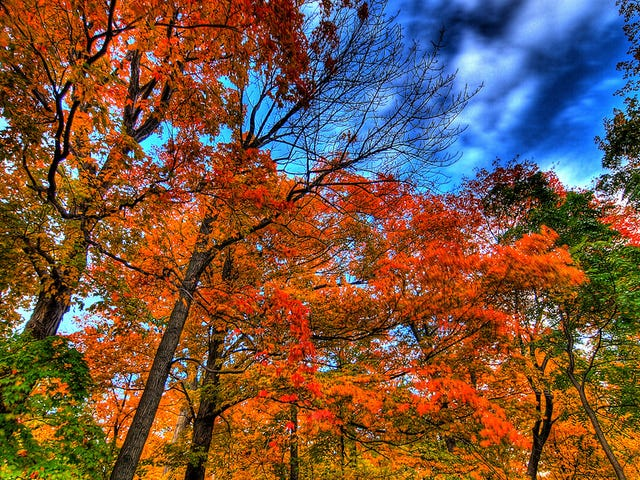 Why the Fall Foliage in Your Area Might Be Disappointing This Year