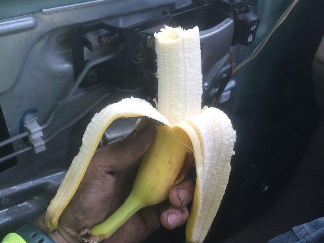 Bananas are a convenient snack