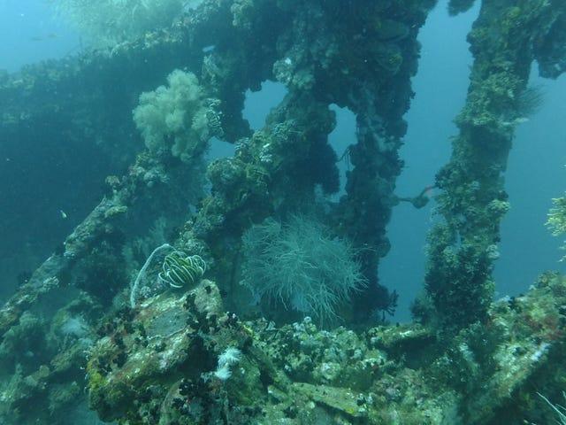 World War II Shipwrecks Are Vanishing at a Disturbing Rate