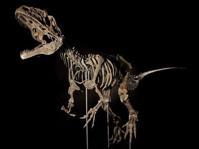 Subastan entre millonarios el fósil de un dinosaurio desconocido porque los museos no podían pagarlo