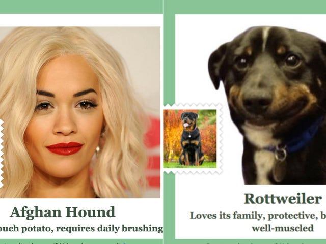 हर कोई कृपया इस वेबसाइट का उपयोग करें और फिर मुझे बताएं कि आप किस तरह के कुत्ते हैं